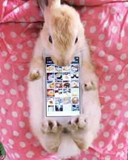 #bunnycase, des smarphones nus qui préfèrent la fourrure