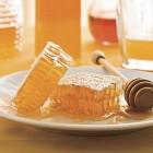 L'après Gingerbread s'appellera-t-il Honeycomb ?