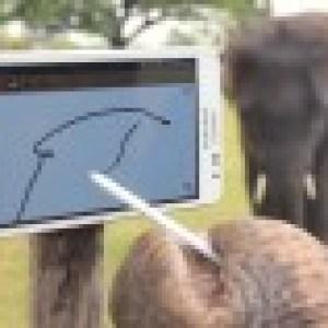 Des éléphants qui adorent le Samsung Galaxy Note
