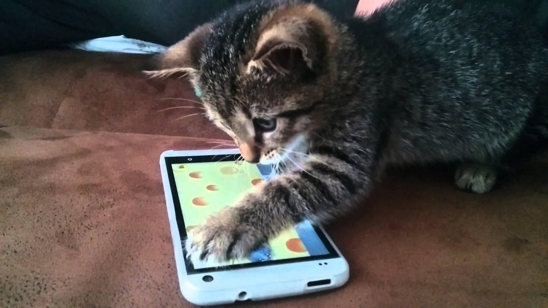 15 applications et objets connectés pour chiens et chats sur Android