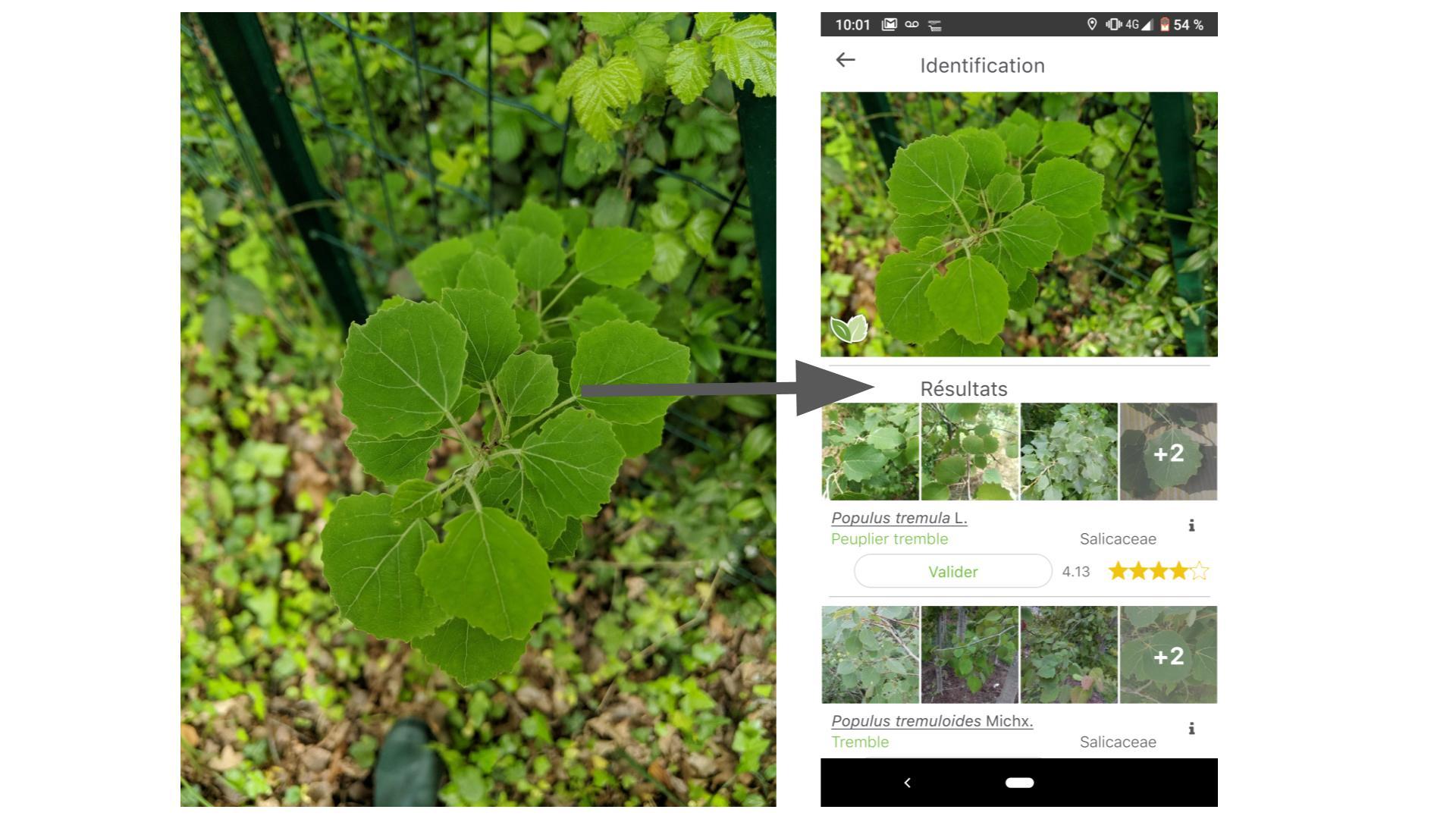 L'app de la semaine : les plantes et les fleurs n'ont plus aucun secret pour moi