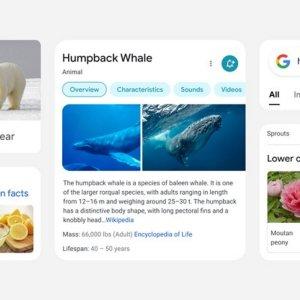 Google : une nouvelle interface pour les résultats de recherche mobile