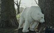 greenpeace-ours-polaire-180×124