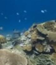 explorez-oceans-street-view-underwater-180×124