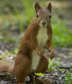 ecureuils-anglais-londres-monstres