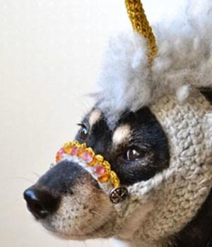 bonnet-licorne-tricot-chien