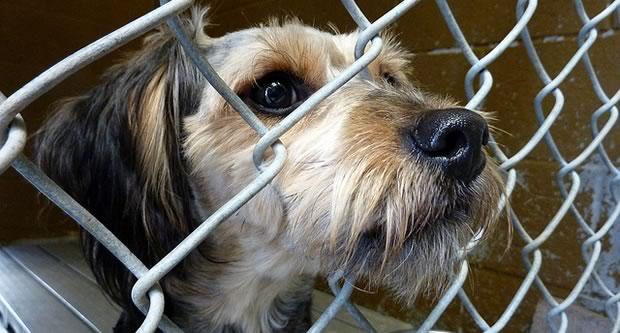 Comment adopter un chien, l'élever et en prendre soin