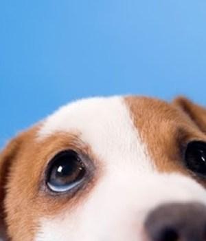 5-informations-chiens