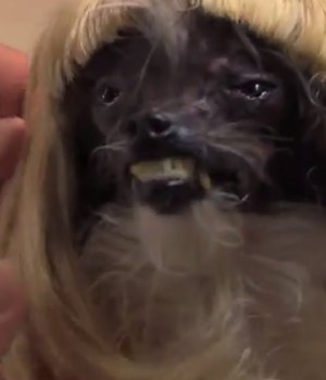jimmy-kimmel-relooking-chien-laid