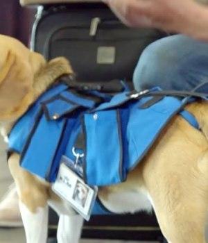 chien-ramene-objets-trouves-aeroport