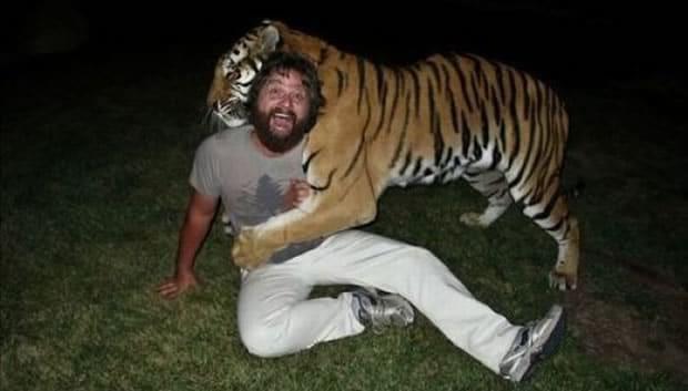 the-hangover-tiger