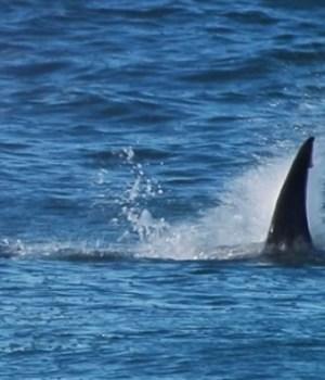 champion-surf-attaque-requin