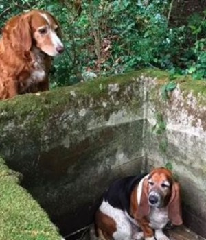 amitie-chiens