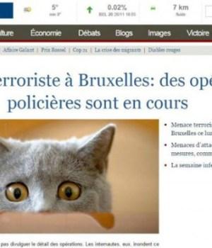 brusselslockdown-chatons-operations-anti-terroristes