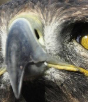 oiseaux-tendance-psychopathe