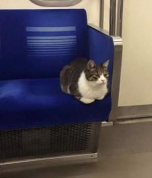 japon-chat-train