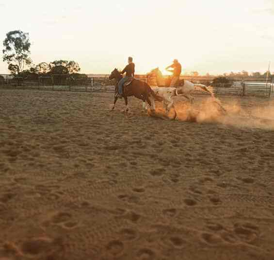 outback-australie-elevage-chevaux