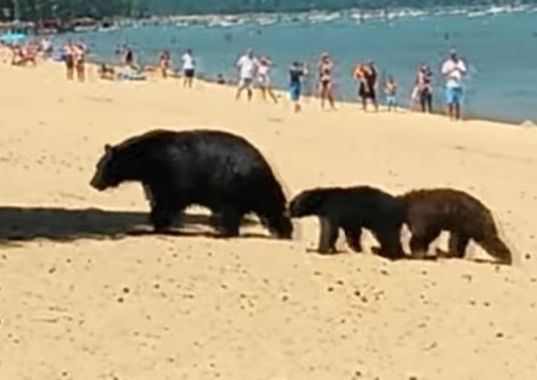 famille-ours-plage
