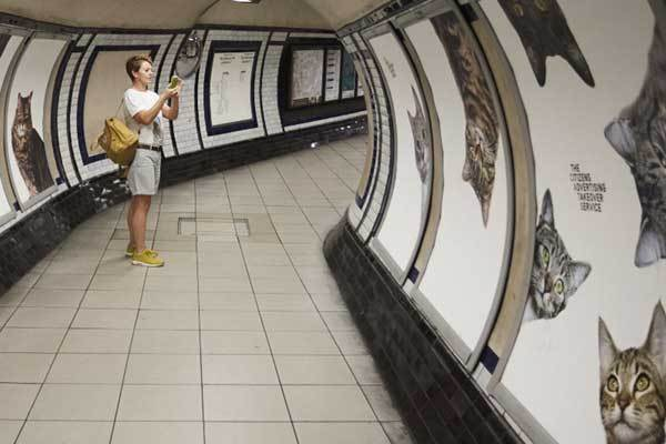 chats-pubs-metro-londonien3