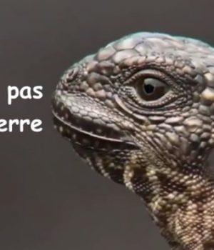video-iguane-serpents-bbc