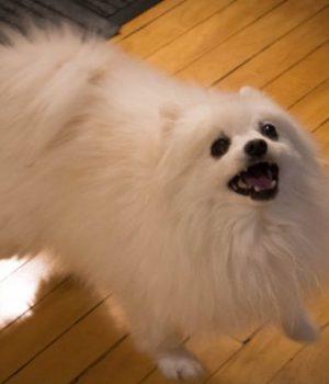 gabe-the-dog-meme-mort