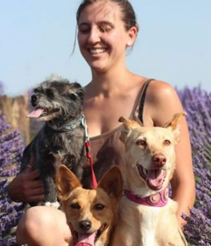 adopter-chiens-rescapes-espagne