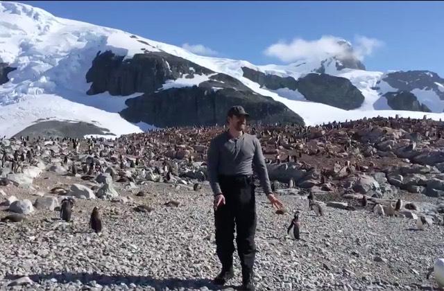 david-harbour-antarctique-pingouins