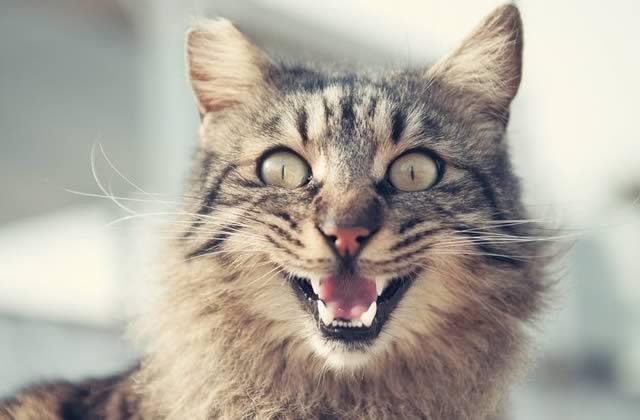 chat-plantes-d-interieur