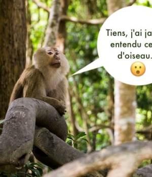 sexe-amazonie-foret-tropicale-voyage