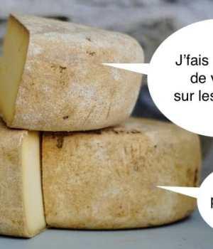 etude-musique-fromage