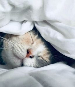 «sommeil-conseils»