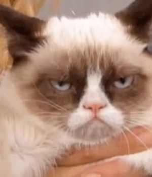 grumpy-cat-mort
