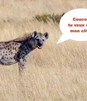 hyene-femelle-penis