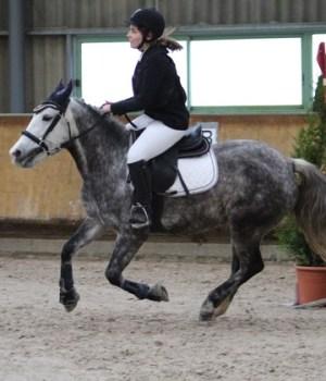lecons-equitation
