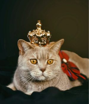 chat-couronne-vert
