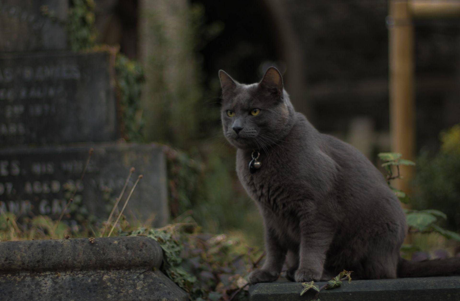 Un chat dans un cimetière.