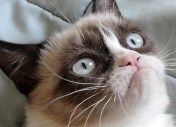 #CopyrightMadness : Grumpy Cat, Jessica Simpson, Starbucks, General Motors...