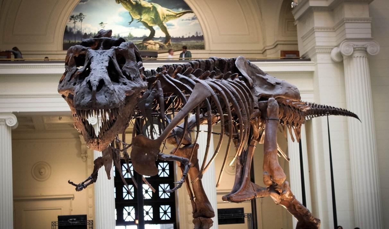 On ne sait toujours pas différencier les dinosaures mâles et femelles